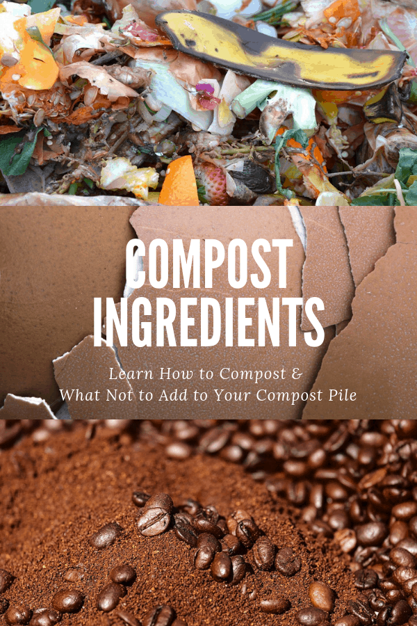 food scraps eggshells coffee grounds with text overlay compost ingredients learn how to compost and what not to add to your compost pile