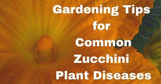 tips for growing zucchini plants
