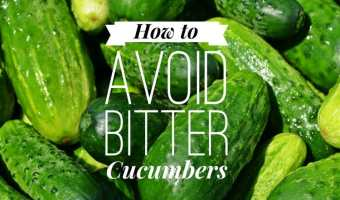 How to Avoid Bitter Cucumbers