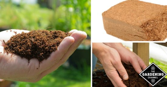 The Many Benefits of Coir Mulch - Gardening Channel
