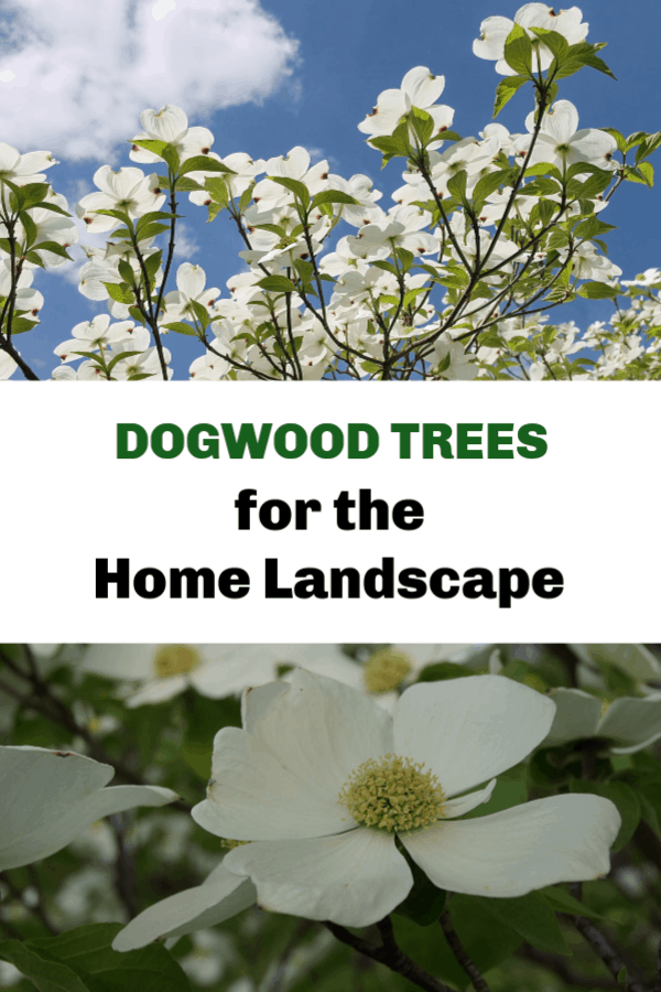 dogwood tree and closeup dogwood bloom with text overlay dogwood trees for the home landscape