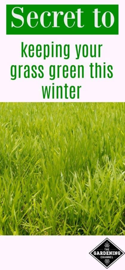 Secret to keeping grass green