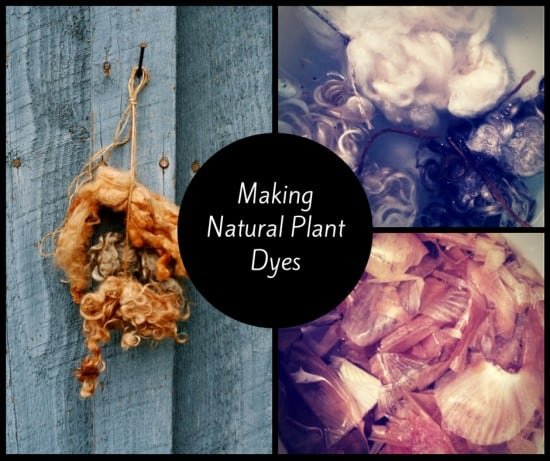 Making Natural Plant Dyes 2