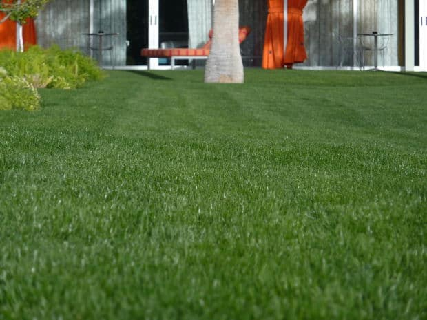 Use Zoysia Grass For A Low Maintenance Lawn Gardening Channel