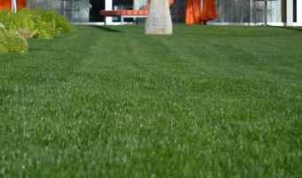 Use Zoysia Grass for a Low Maintenance Lawn