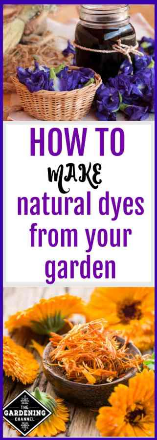 Making natural dyes from your garden