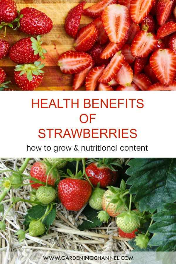 strawberries on cutting board and strawberry plant with text overlay health benefits of strawberries how to grow and nutritional content