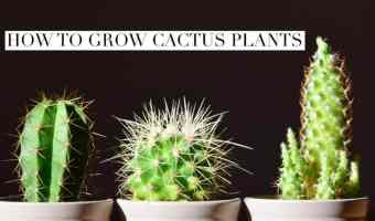 How to Grow Cactus Plants