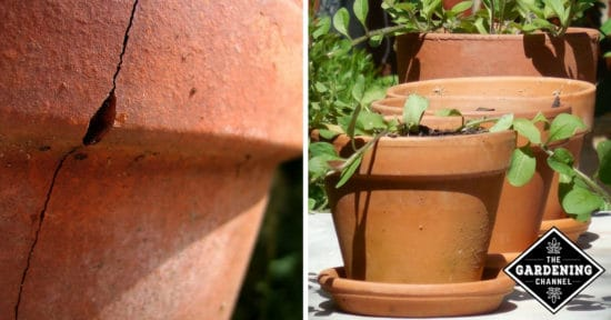 Gardening Channel & Caring for Terracotta Pots - Gardening Channel