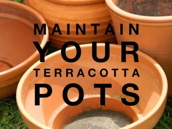 How to clean clay pots with baking soda