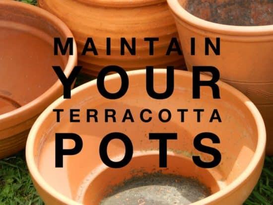 maintain clay pots