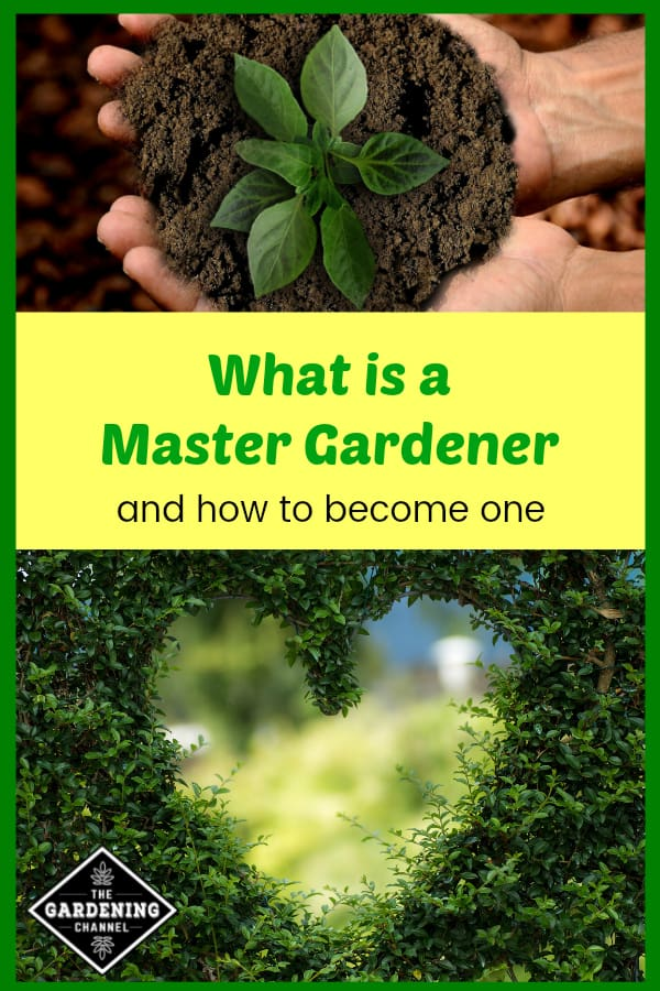 seedling held in hands and heart design in ivy with text overlay What is a Master Gardener and how to become one