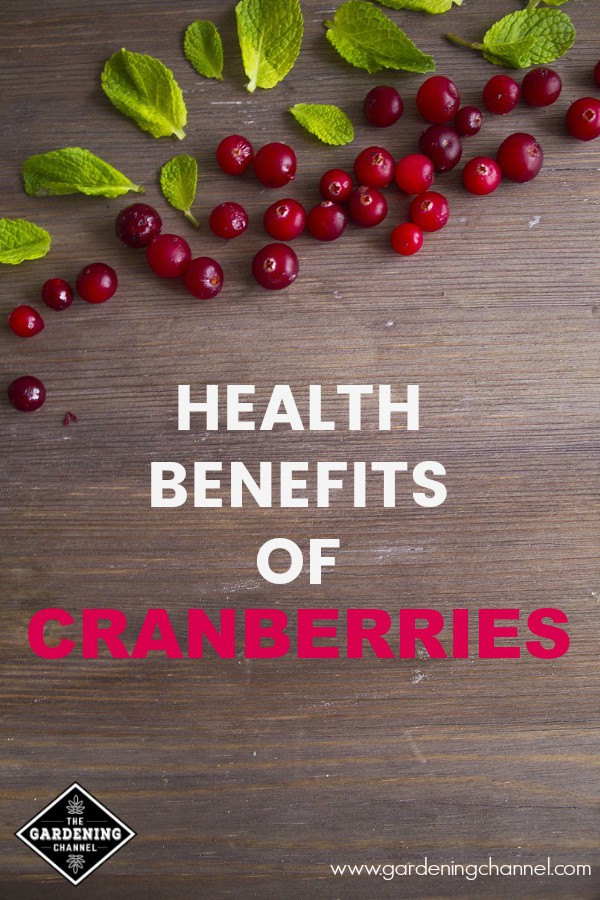 cranberries on wooden background with text overlay health benefits of cranberries