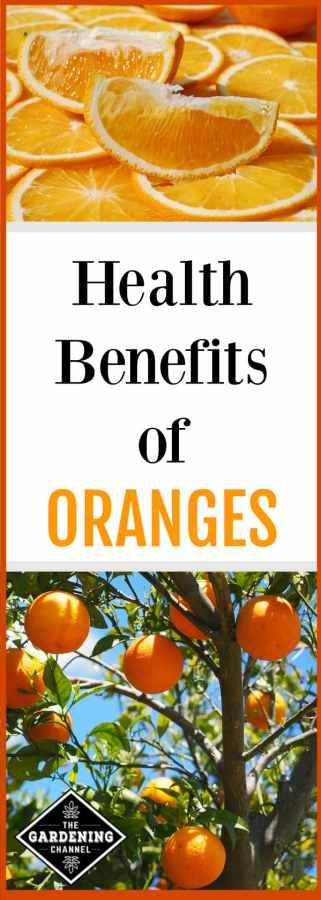 eat oranges for health benefits