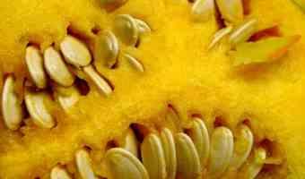 Health Benefits of Pumpkin and Pumpkin Seeds