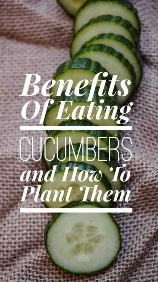 Benefits of Eating Cucumbers