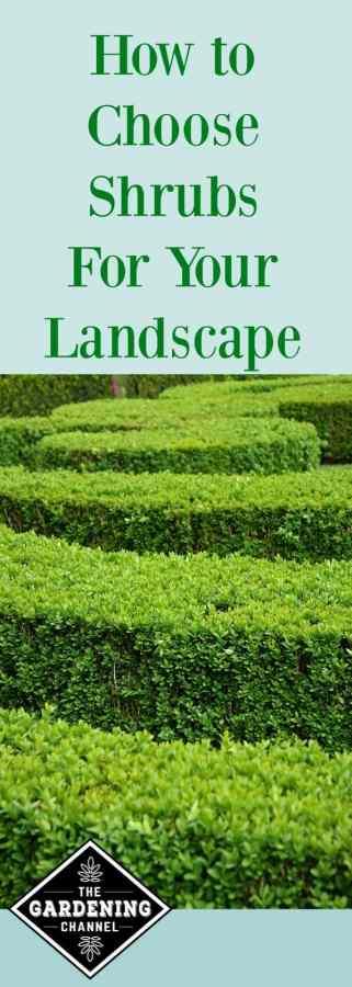 choosing shrubs for your landscape