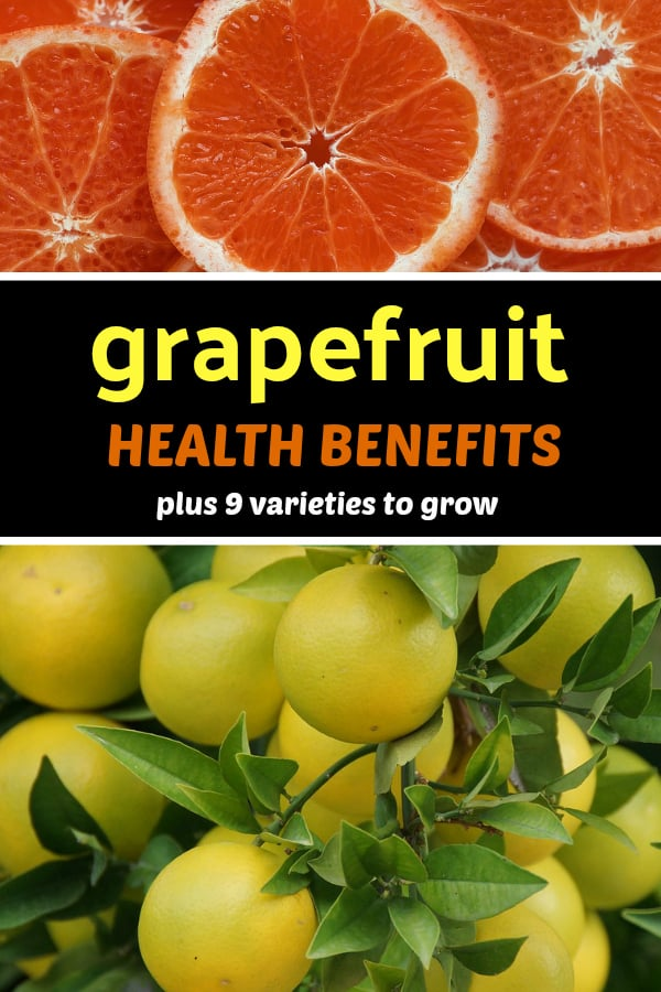 grapefruit slices and grapefruit trees with text overlay grapefruit health benefits plus nine varieties to grow