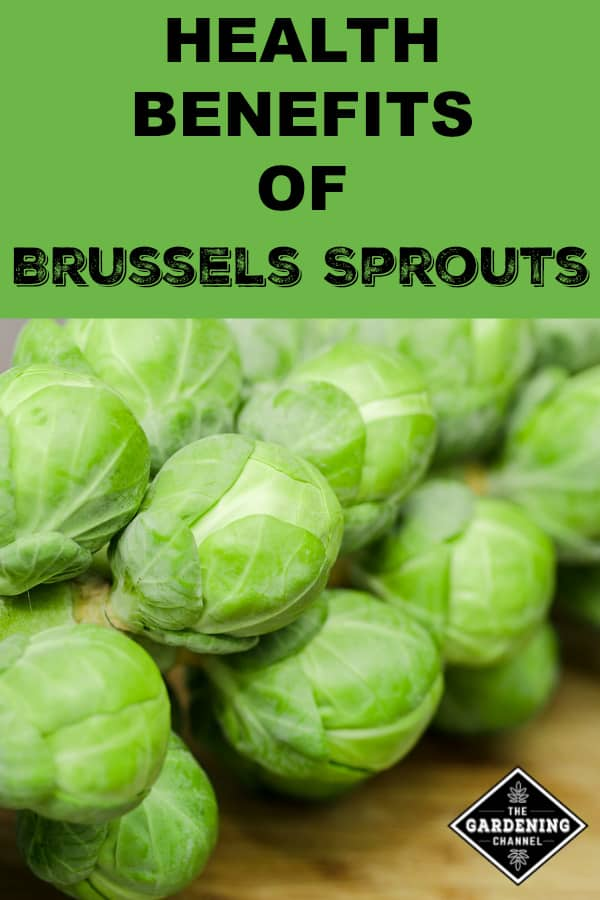 fresh Brussels Sprouts with text overlay health benefits of Brussels Sprouts