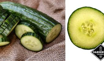health benefits of eating cucumbers