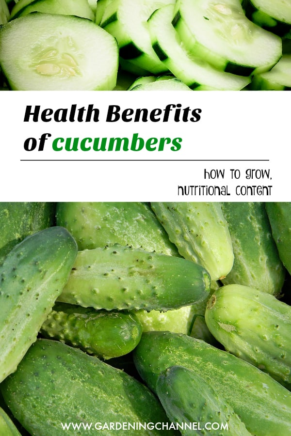 sliced cucumbers and harvested cucumbers with text overlay health benefits of cucumbers gow to grow nutritional content