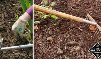 How to weed your garden