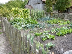 Growing A Green Garden Gardening Channel