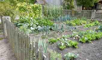 Growing a Green Garden