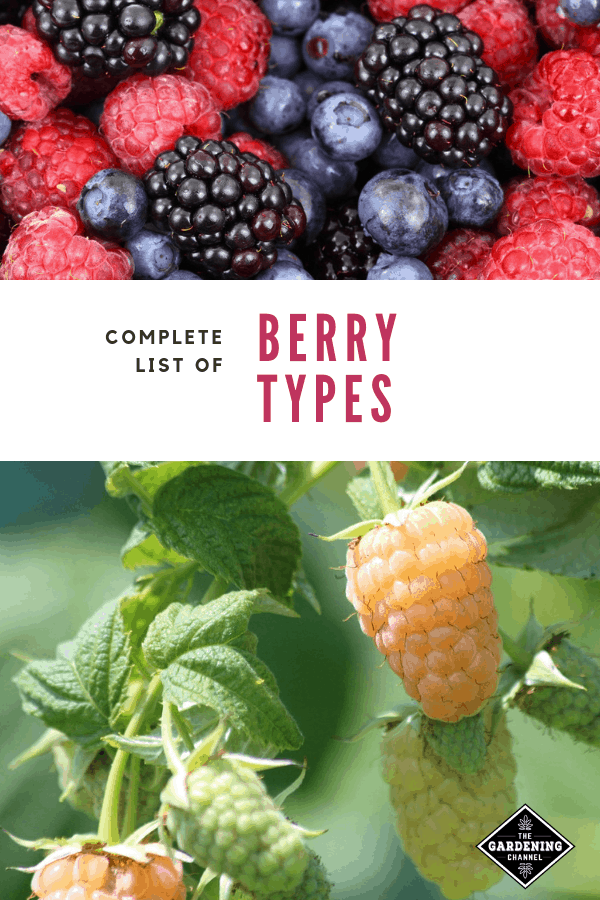 assorted berries white mulberries growing with text overlay complete list of berry types