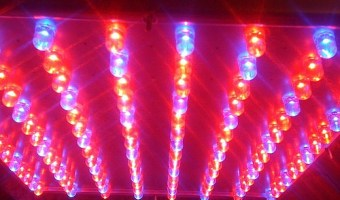 LED Grow Lights: How to Choose