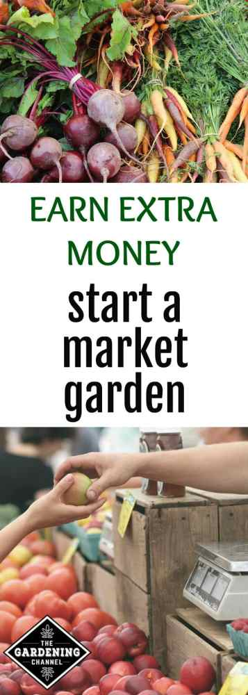 fresh market vegetables and selling apples at farmers market with text overlay earn extra money by starting a market garden
