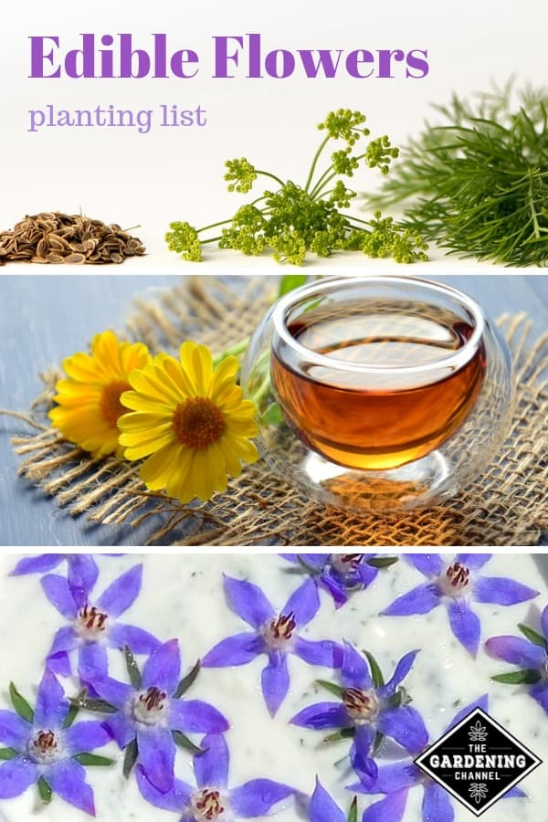dill flowers calendula tea and flower in yogurt with text overlay edible flowers planting list