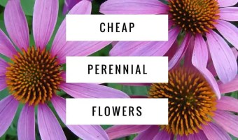 Inexpensive Perennial Garden Flowers