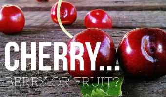 Is Cherry berry or fruit
