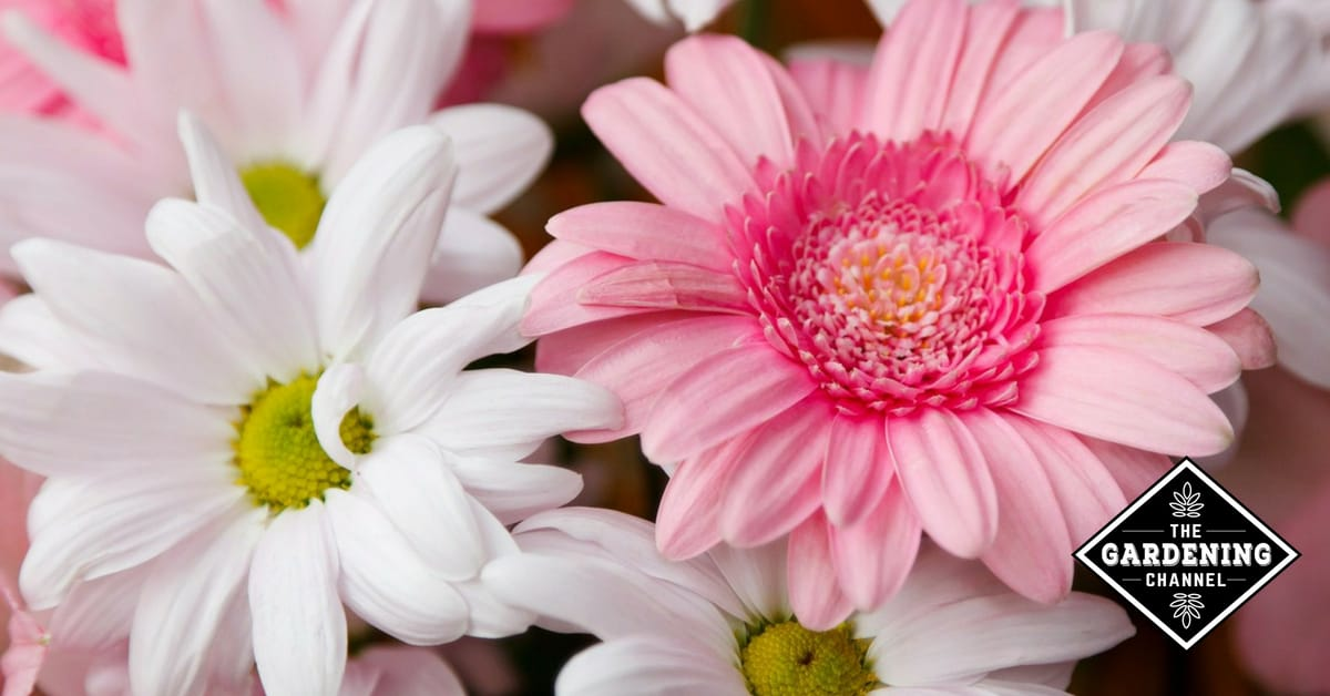 Flower Meaning Symbolism And Colors Gardening Channel