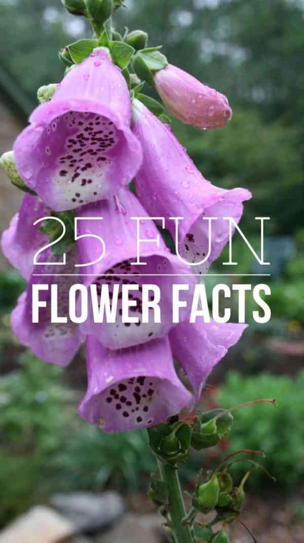 25 Fun Facts About Flowers - Gardening Channel