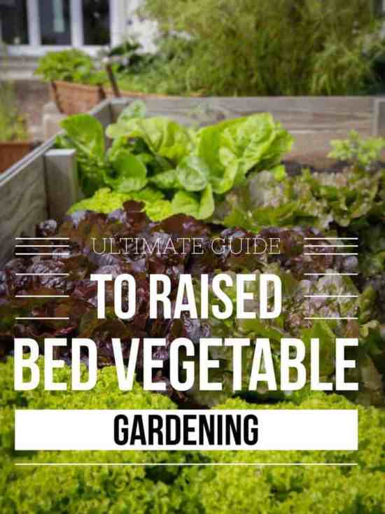 pinterest pin this vegetable raised bed