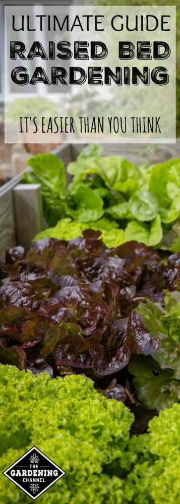 lettuce greens growing in raised bed garden with text overlay ultimate guide raised bed gardening it's easier than you think