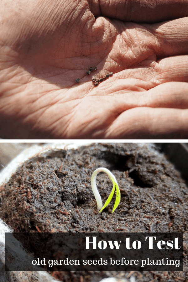 seeds in hand seed sprouting with text overlay how to test old garden seeds before planting