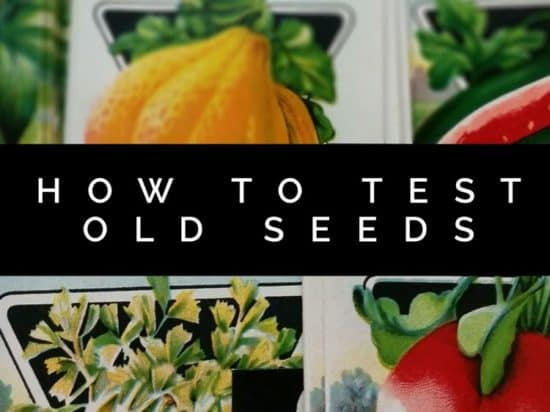 Testing Old Seeds