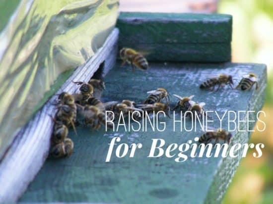 Beginning Tips for Raising Honey Bees