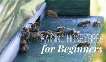 Raising Honeybees for Beginners