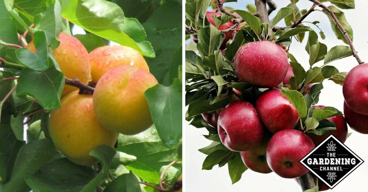 Small Acre Backyard Orchards - Gardening Channel