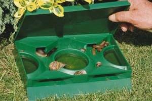 Slug and Snail Pest Control