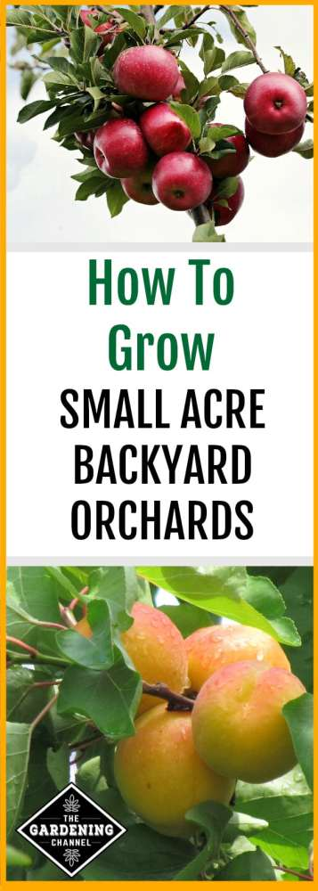 apple and peach orchard trees with text overlay how to grow small acre backyard orchards