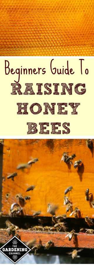 Guide to raising honey bees