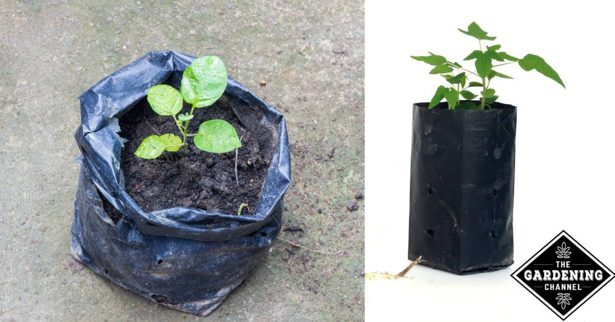Plant A Small Garden In A Bag Of Soil Gardening Channel