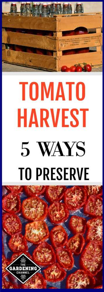 Looking for ways to preserve your tomato harvest? Don't miss this guide on how to preserve tomatoes from your garden.
