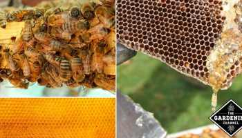 How To Get Rid of Honey Bees, Swarms and Hives in Your House