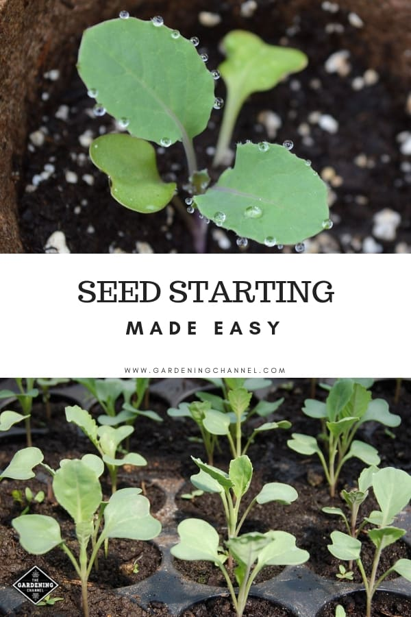 single seedling and seedlings in seed starting tray with text overlay seed starting made easy